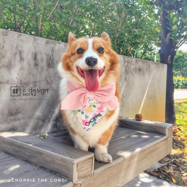 Dog Bandana Singapore   Dog Bow Bandana   Dog Bandana with Customized Hand-embroidery Name   Dog Accessories「 ii Design Workz 」